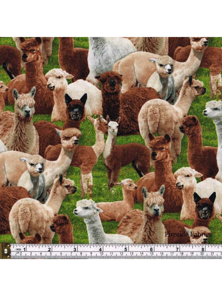 FARM ANIMALS - ALPACA