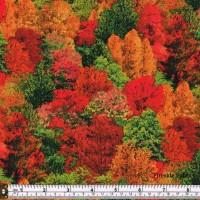 LANDSCAPE MEDLEY - FOREST TREES - MULTI