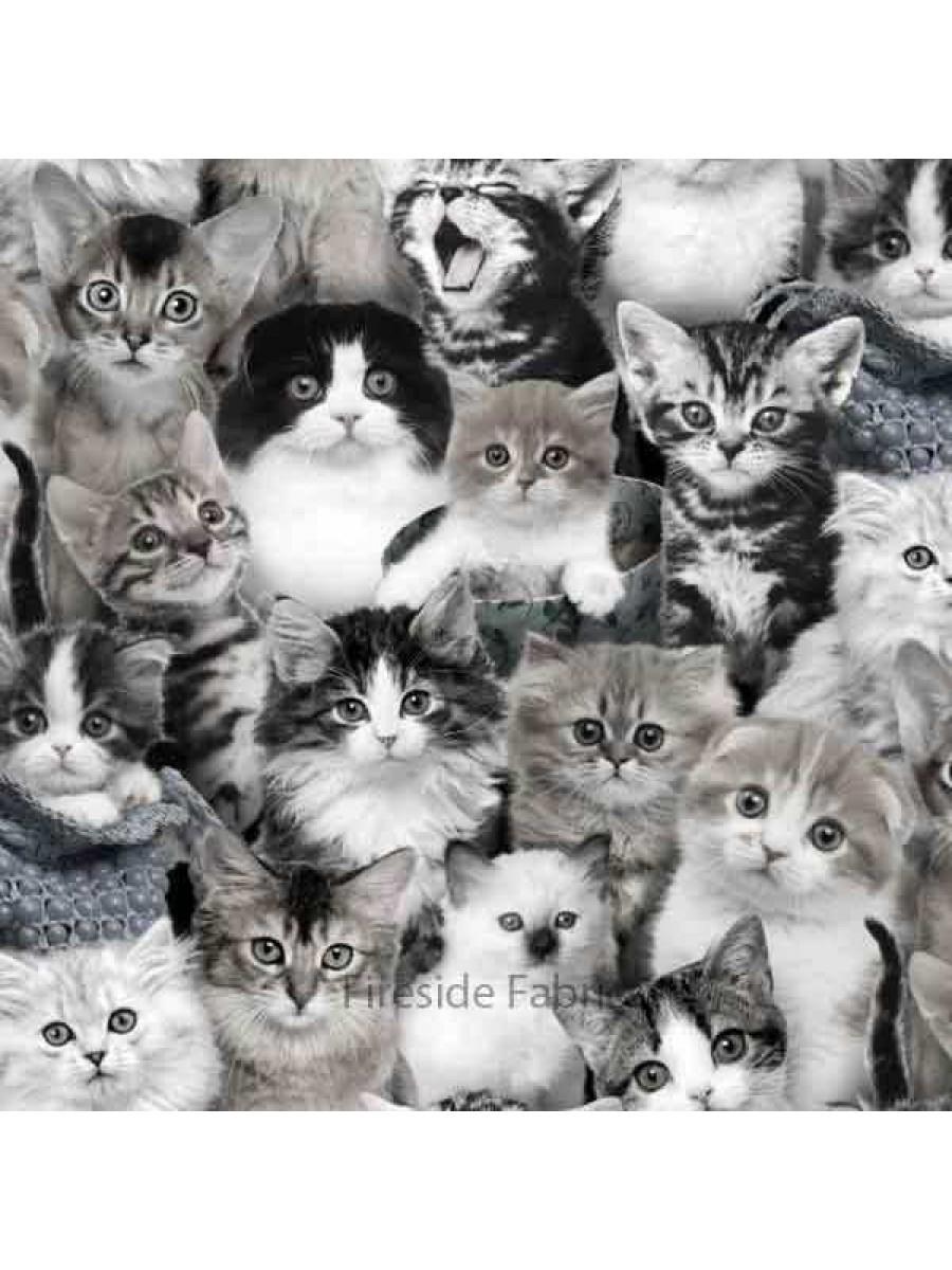 CAT BREEDS - CROWD - GRAY