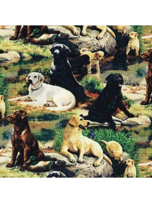 BEST IN BREED - LABRADORS (2 Left)